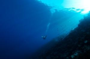 Mergulho Egito Dahab